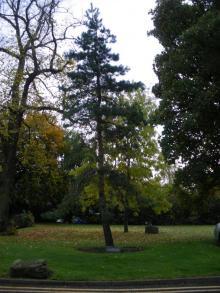 Plaque next to Scots Pine